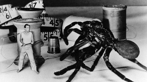 I ragni nel cinema fantastico: Radiazioni BX: distruzione uomo (1957), di jack Arnold. , di Jack Arnold. Una migale attacca il protagonista | Foto: Universal / The Kobal Collection