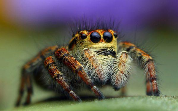 Chi ha paura dei ragni? La loro morfologia ci appare aliena.